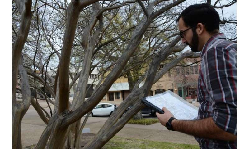 Crape myrtle bark scale study reveals tree treatments to fight pest