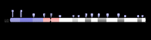 CRKL in 22q11.2; a key gene that contributes to common birth defects