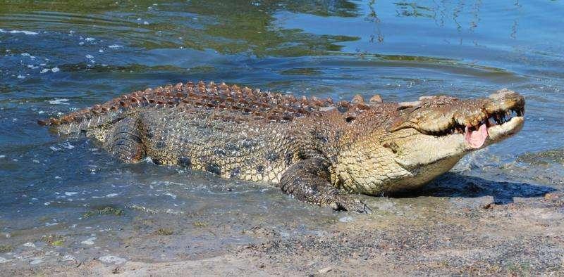 Croc research on gambling habits gets an Ig Nobel