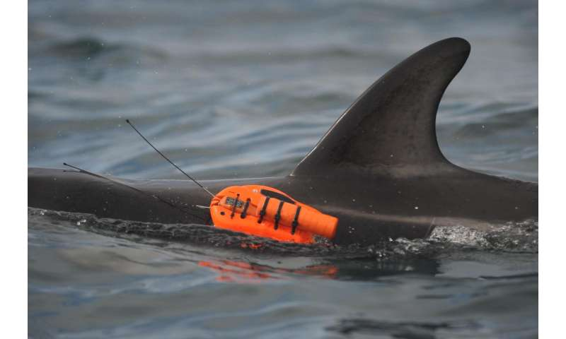 Cutting-edge cameras reveal the secret life of dolphins