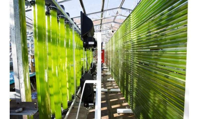Cyanobacteria—the future of sunscreen?