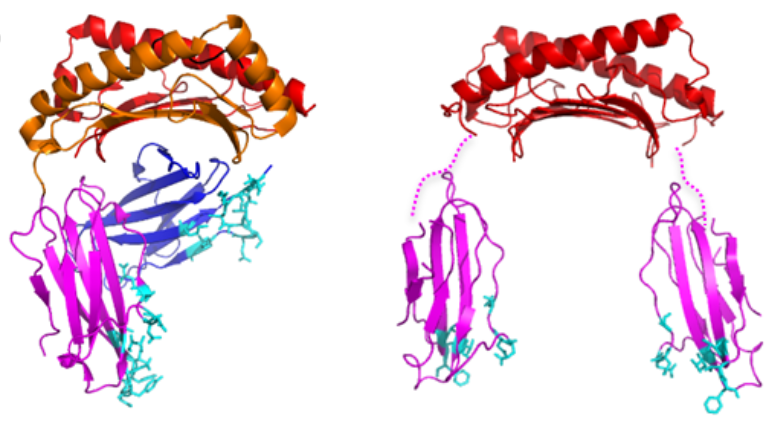 Deciphering an embryo-protecting protein