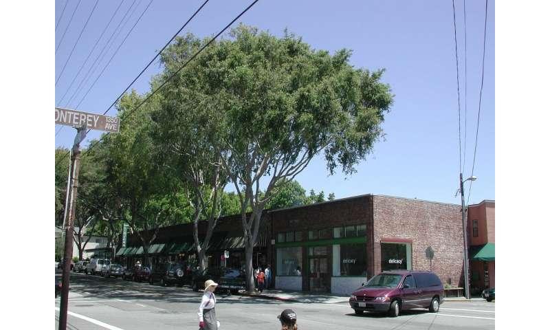 Despite city tree benefits, California urban canopy cover per capita lowest in US