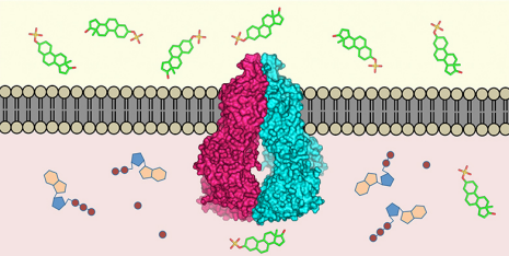 Detailed view of a molecular toxin transporter