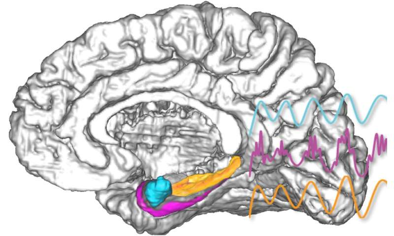 Direct amygdala stimulation can enhance human memory