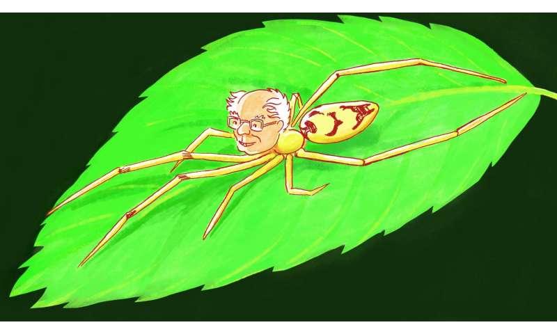 Discovery: Bernie Sanders spider