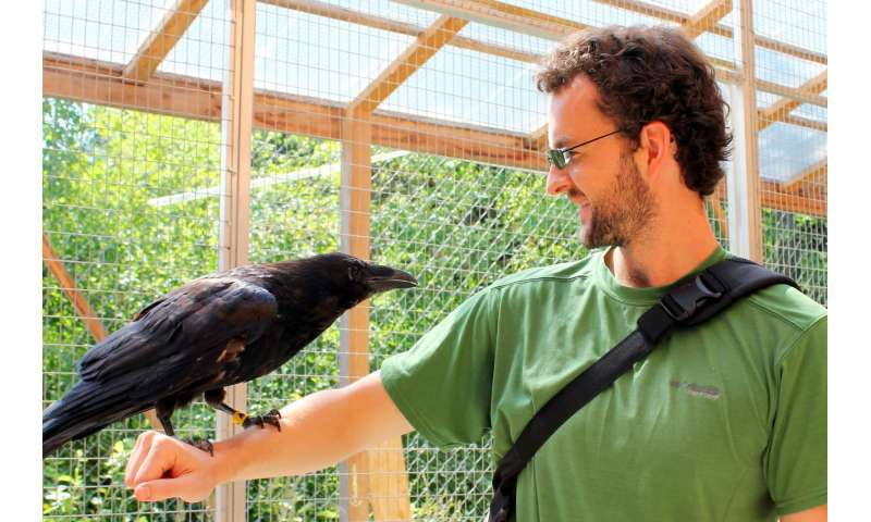 Do animals think rationally?