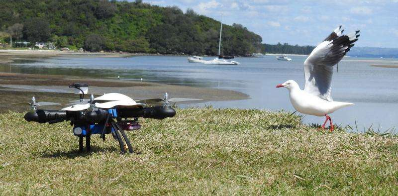 Drones and wildlife – working to co-exist
