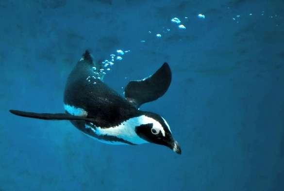 Drug safety for penguins