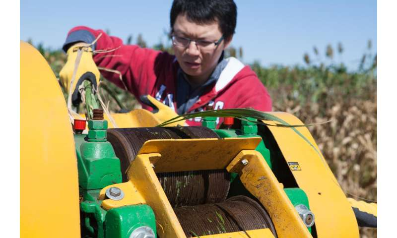 Dual-purpose biofuel crops could extend production, increase profits