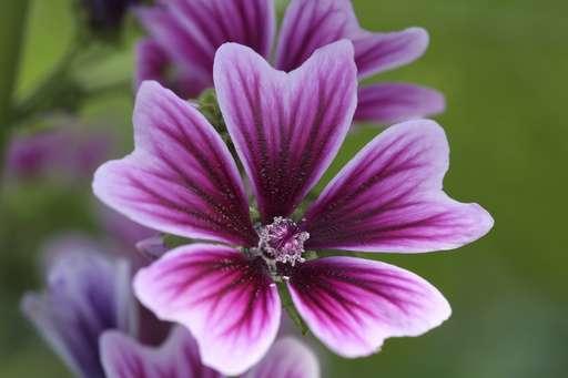 Dutch treat: Philadelphia Flower Show celebrates Holland