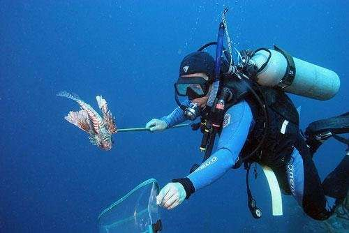 Economists develop decision-making method for lionfish management