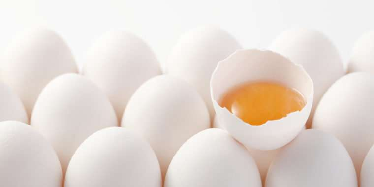 Eggs improve biomarkers related to infant brain development