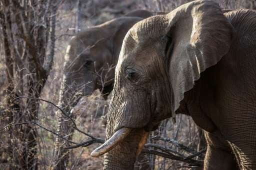 Elephants in South Africa photographed in September 2016