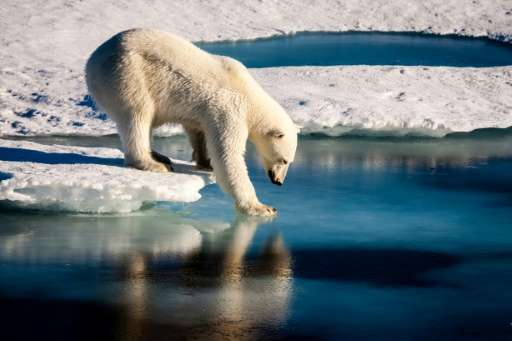 Environment: Man-made warming is mainly to blame for the loss of Arctic sea ice, a new study says. The ice is essential for pola