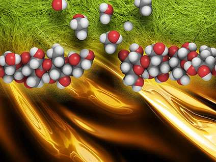 Enzyme shows promise for efficiently converting plant biomass to biofuels