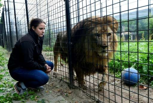 Established in 2011 by a passionate businessman, the Stichting Leeuw (Lion Foundation) refuge in The Netherlands is looking afte