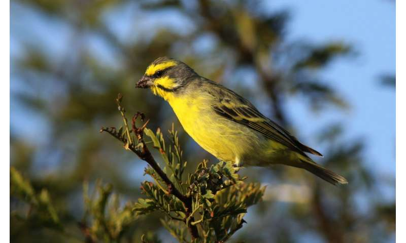 EU trade ban brings down global trade in wild birds by 90 percent