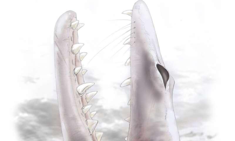 Des épaules de baleines précoce ont écouté comme leurs parents sur terre, les témoignages fossiles montrent
