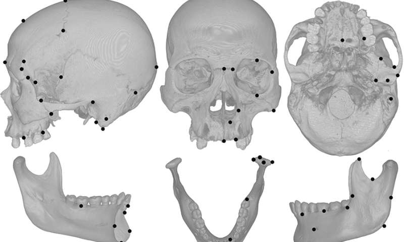 Cheese Chewing Changed Human Skull Shape