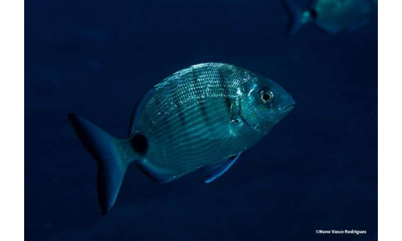 Female fish 'more reluctant' to change sex than males