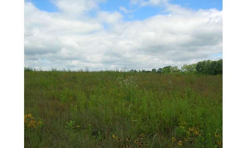 Fertilizers adjust nitrogen cycle of prairie plants, according to Iowa State University study
