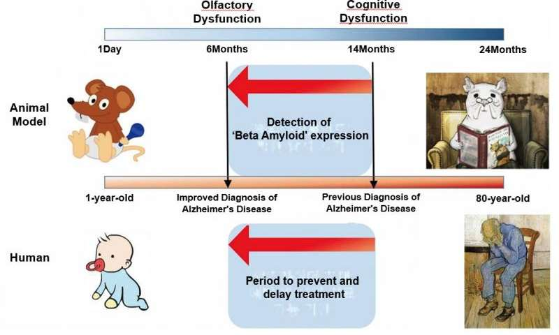 Findings could lead to early diagnosis of Alzheimer's