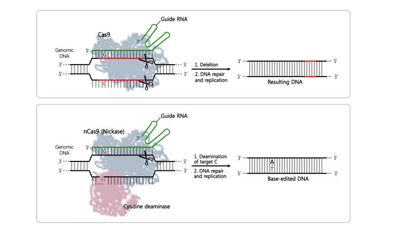 First CRISPR single-nucleotide edited transgenic mice