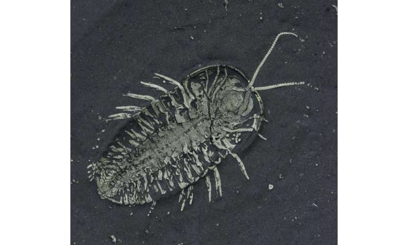 First-ever discovered trilobite eggs found paired with adult fossil
