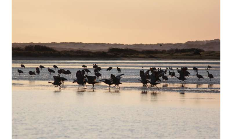 First long-term study of Murray-Darling Basin wetlands reveals severe impact of dams