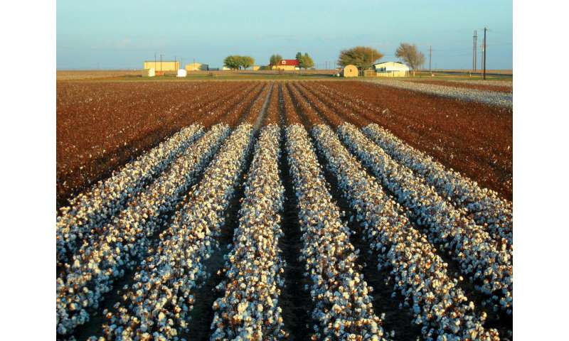 First step taken toward epigenetically modified cotton