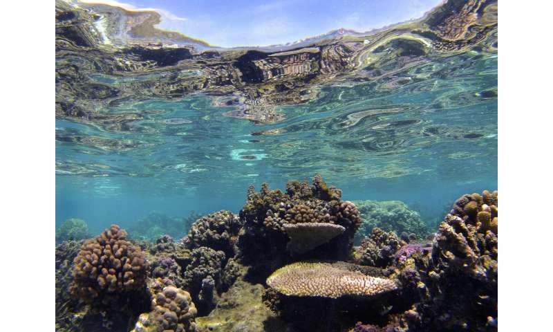 Fish social lives may be key to saving coral reefs