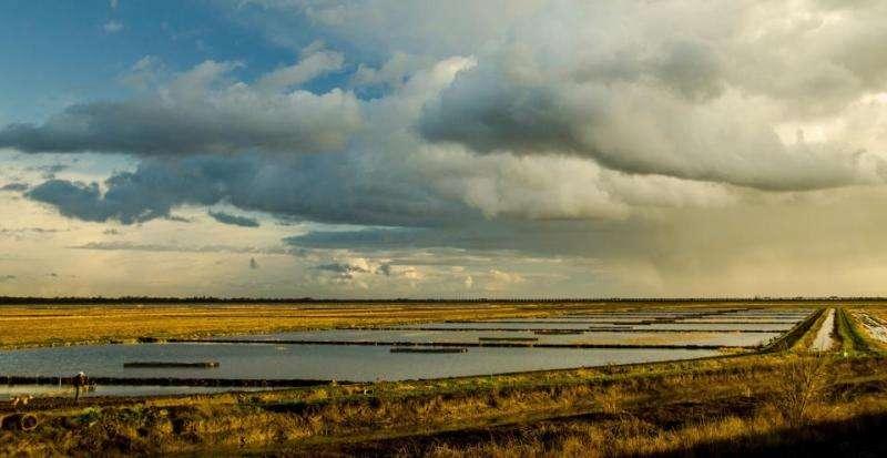 Floodplain farm fields benefit juvenile salmon