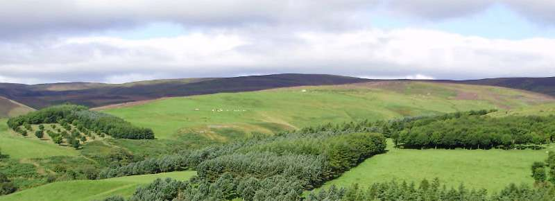Forest grazing counteracts the effectiveness of trees to reduce flood risk