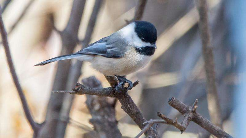 Forest 'islands' offer refuge to wintering birds