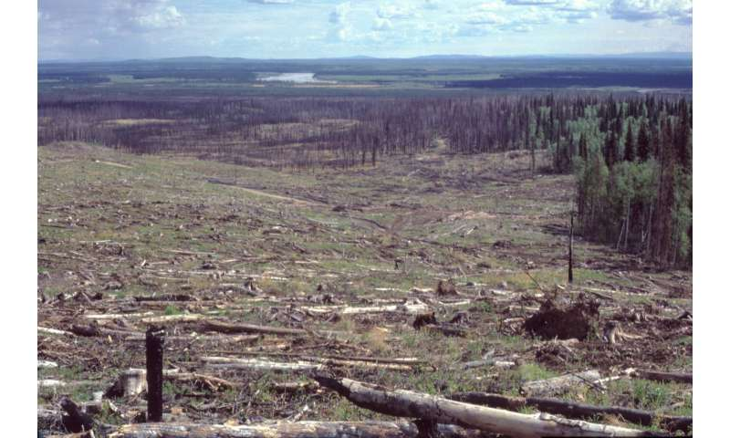 Forest regeneration experiment of 30 years yields results