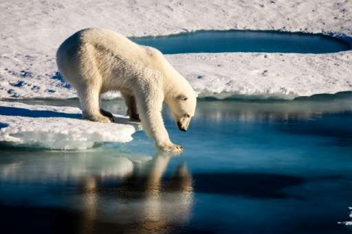 "Freakishly high temperatures in the Arctic have been reinforced by a ""vicious circle"" of climate change"