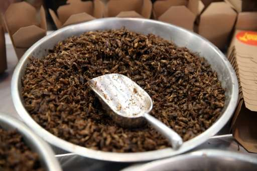 Fried crickets, roasted cockroach, honey-flavoured ants, mealworm and chocolate coated popcorn are now available to try and buy