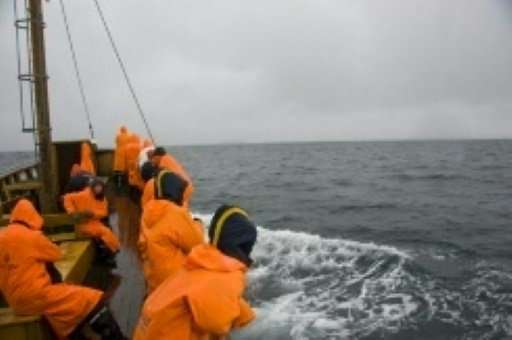 From their meagre beginning in the 1990s, whale safaris in Iceland have grown to attract tens of thousands of visitors