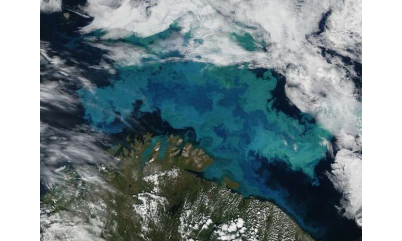 From tiny phytoplankton to massive tuna