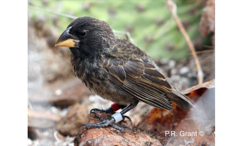 Galapagos study finds that new species can develop in as little as 2 generations