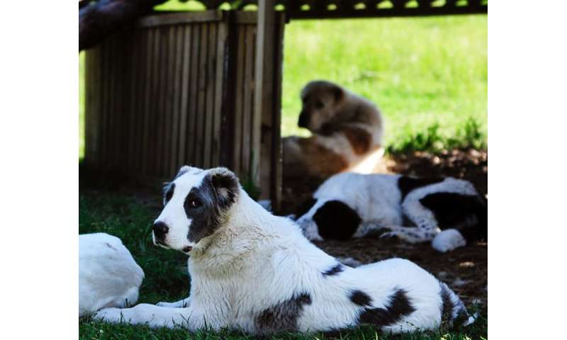 Gene finding to eradicate severe blistering disorder of the skin found in dogs