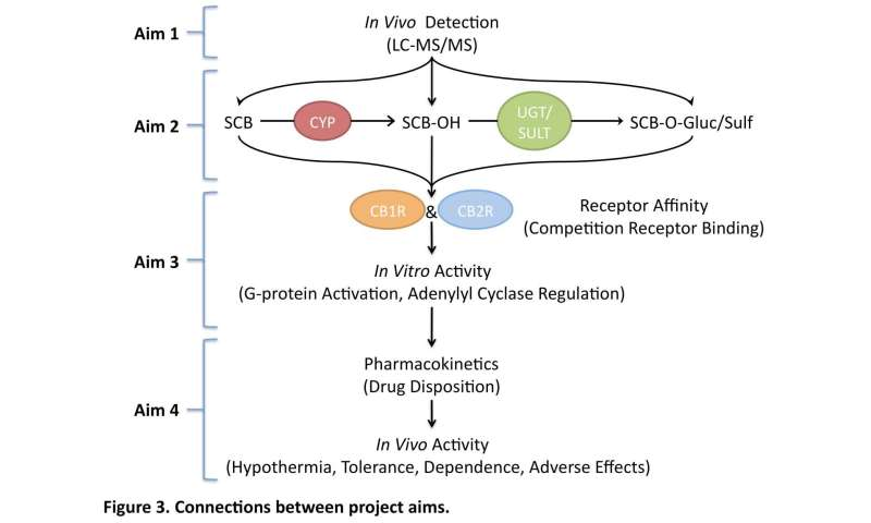 Genetic factors may contribute to adverse effects produced by synthetic cannabinoids