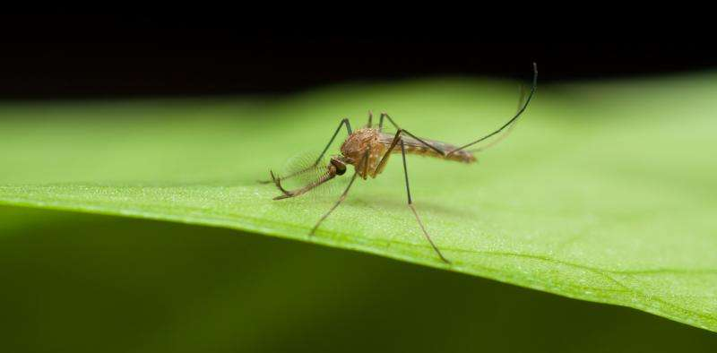Genetic surveillance and why it's critical in the fight against antimalarial drug resistance