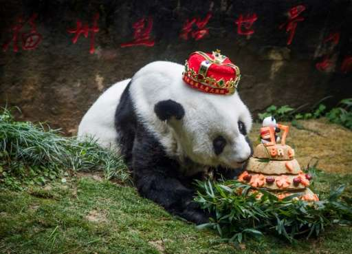 Giant panda Basi was something of a beloved star in China and her birthdays were often celebrated with gusto