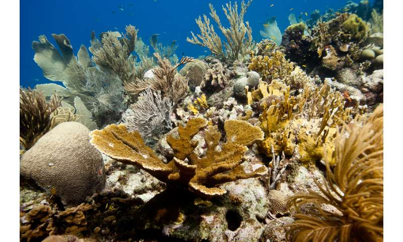 Global coral reef restoration effort launches in the Caribbean