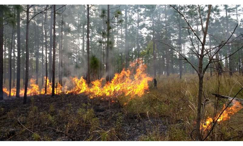 Graduate research fellow investigates how fungi and fire enable pine savanna ecosystem to thrive