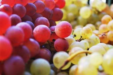 Grape seed extract could extend life of resin fillings
