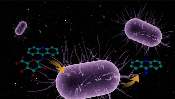 Gut bacteria influences drug-induced liver injury