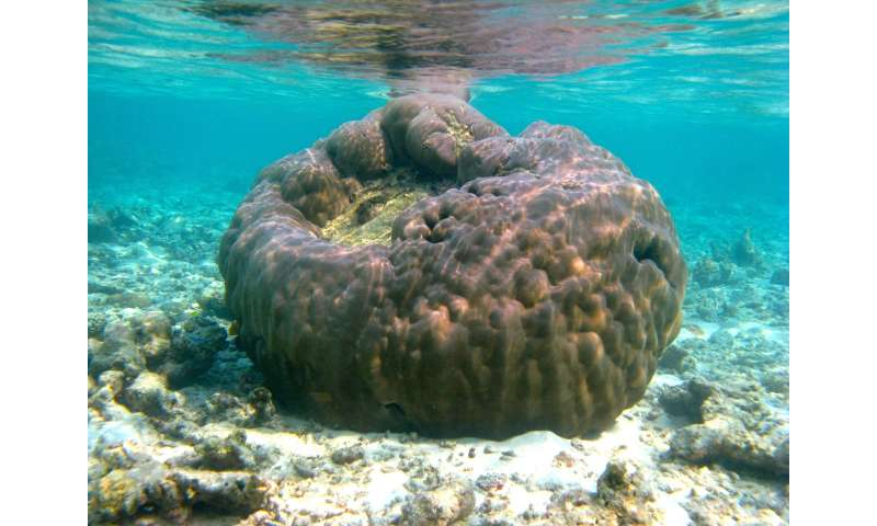 Hardy corals make their moves to build new reefs from scratch